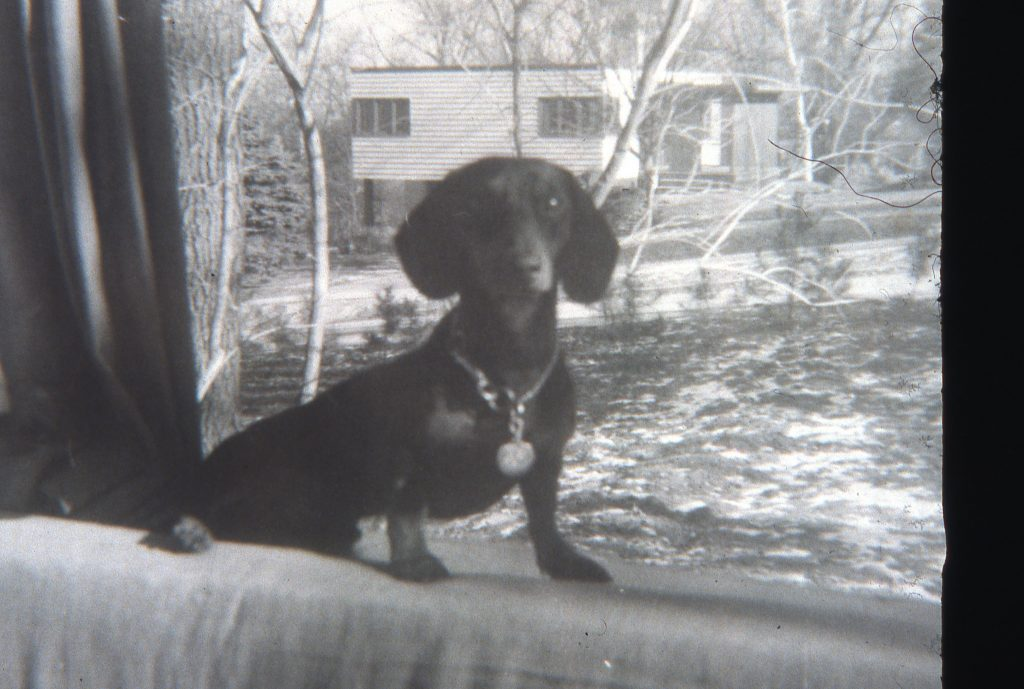 Schnutzie in Mosse's home at 36 Glenway in Madison, Wisconsin.